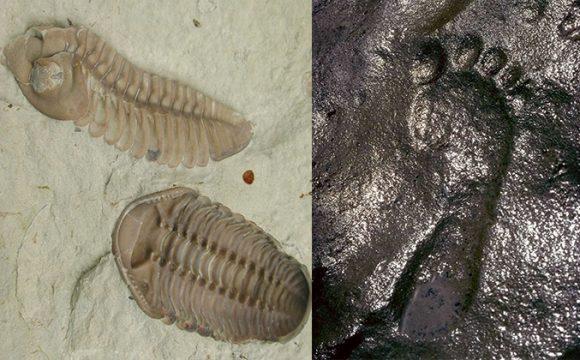 Bí ẩn nền văn minh tiền sử: Hóa thạch bọ ba thùy và dấu chân người 600 triệu năm
