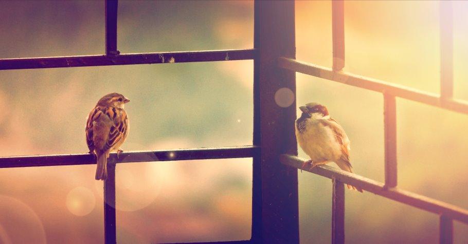 Khi tôi đang mở cửa sổ thì nghe thấy tiếng chim én ríu rít gọi nhau bên ngoài. (Ảnh qua Facebook)
